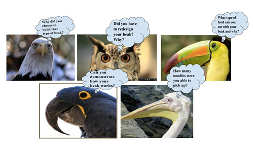Bird Talk Question Stems