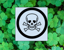 clover is poisonous